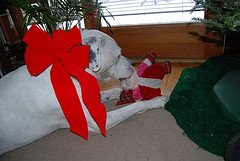Santa lost his head dog 1